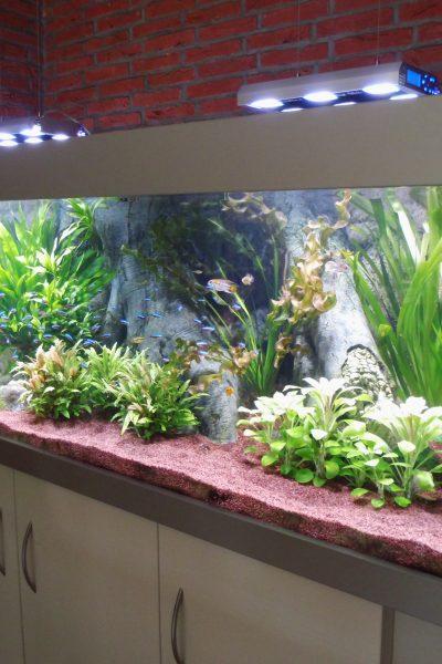 Aquarien Kombinationen - Aquarium-Kombinationen in