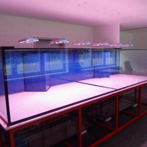 Aquarien XXL 250 cm Länge